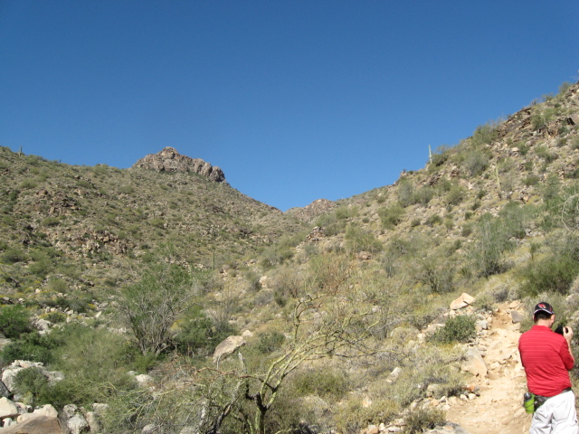 Desert view, looking uphill.